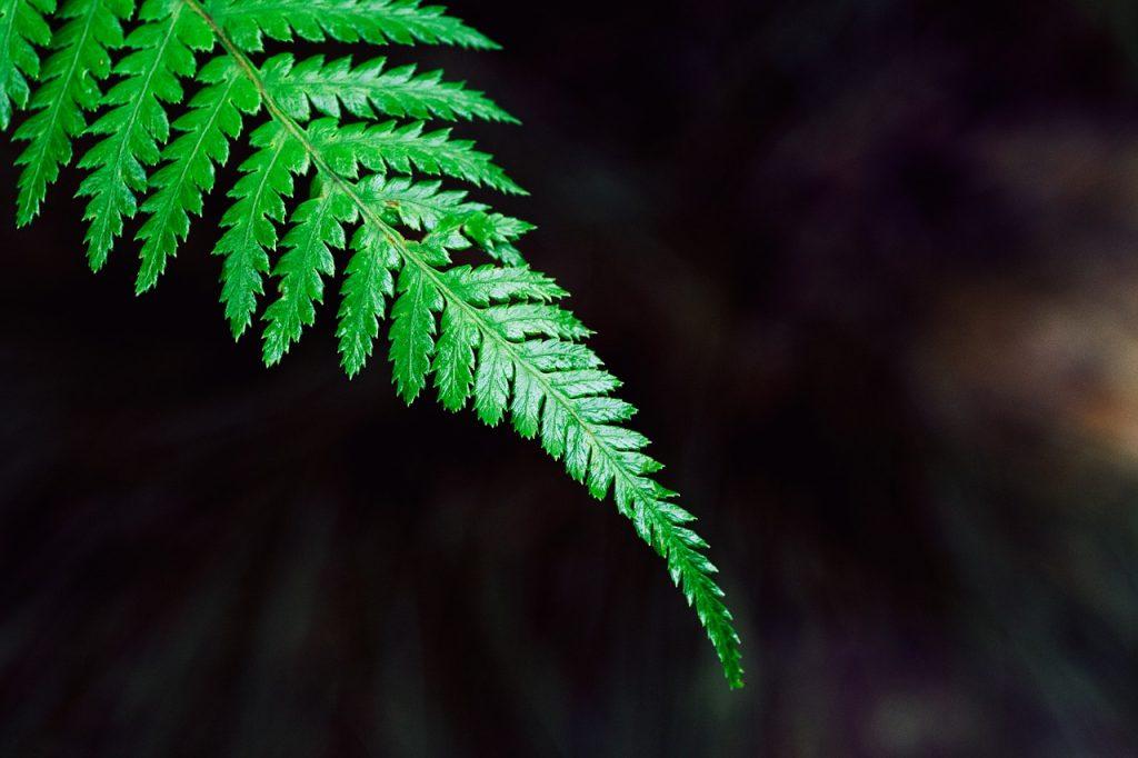 Cinq plantes drainantes pour éliminer naturellement à acheter en Pharmacies Conseillées le plus souvent pour accompagner un régime amaigrissant. Conseillées le plus souvent pour accompagner un régime amaigrissant, les plantes drainantes permettent en réalité d'éliminer l'excès d'eau. Elles peuvent aider en cas de rétention d'eau ou de cellulite. À utiliser avec quelques précautions.