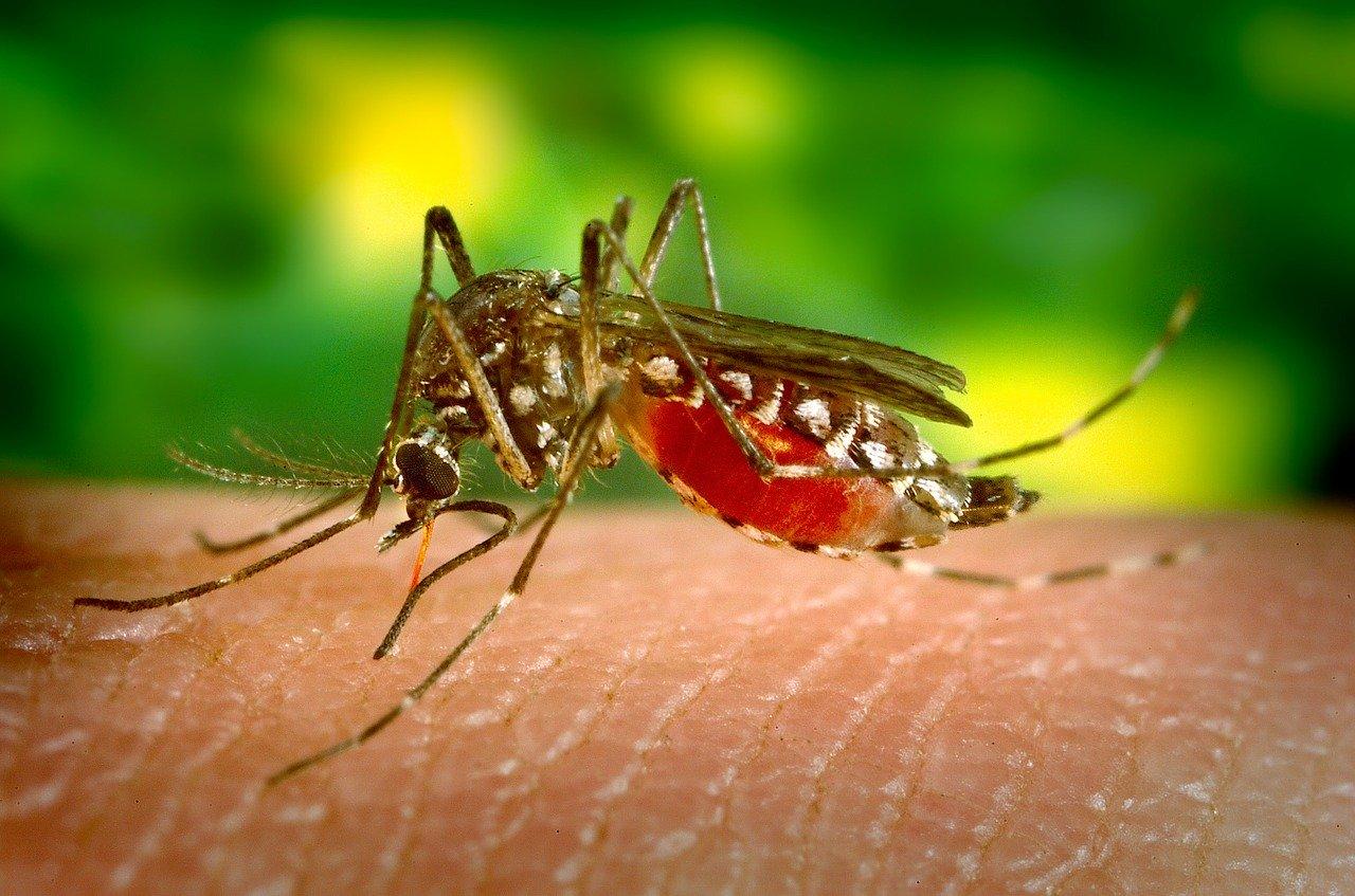 Quels sont les symptômes de la piqûre de moustique ?Vous pouvez demander plus d'informations sur les solutions pour les piqûres de moustiques.